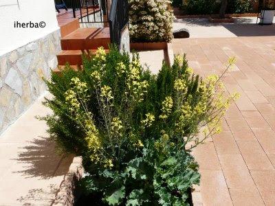 El mundo de las plantas de iherba un arriate florido for Arriate jardin