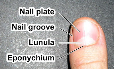 how to get rid of ridges in fingernails yahoo