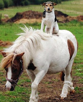 The Final Boss Of the Internet Blog-photo-dog-and-pony-show-702125