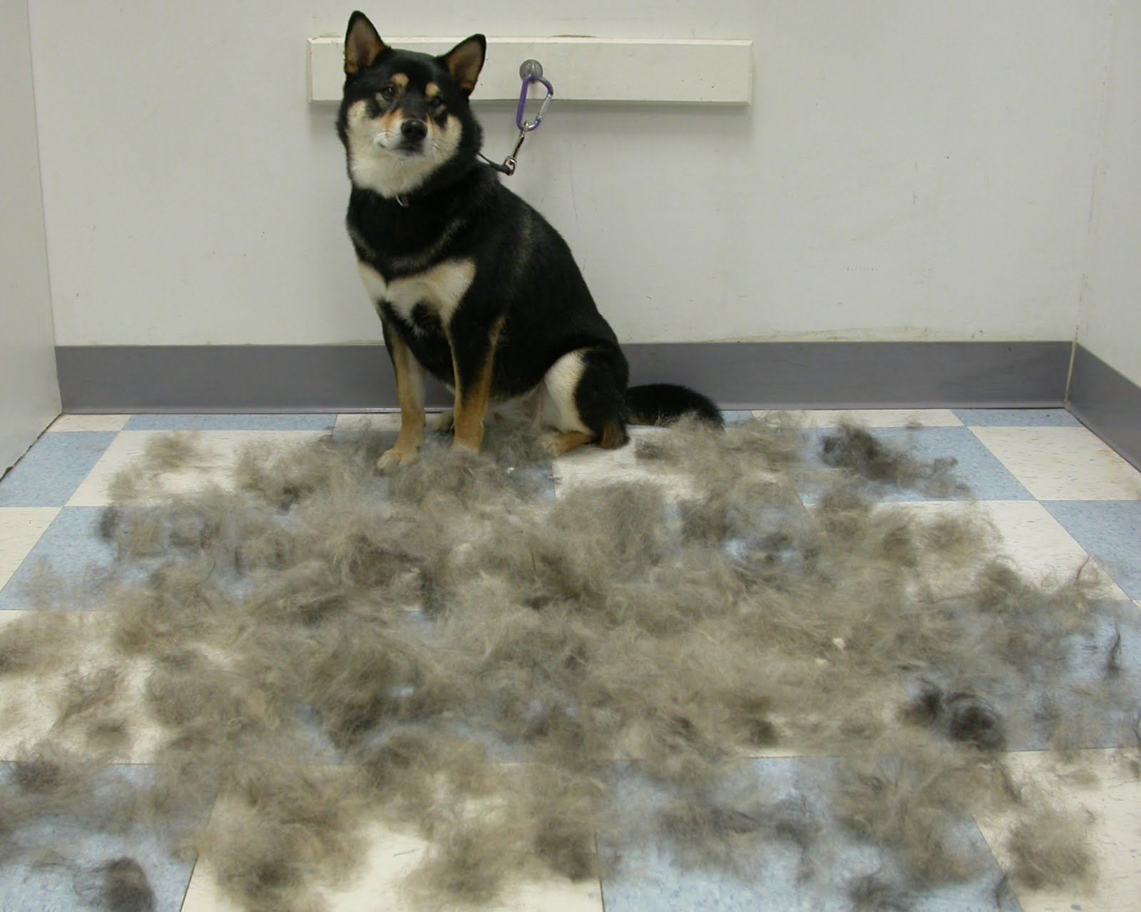 Kingsbrook Animal Hospital's Blog: Low Shedding Medium/Large Breeds