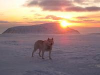 Hopski i solnedgang