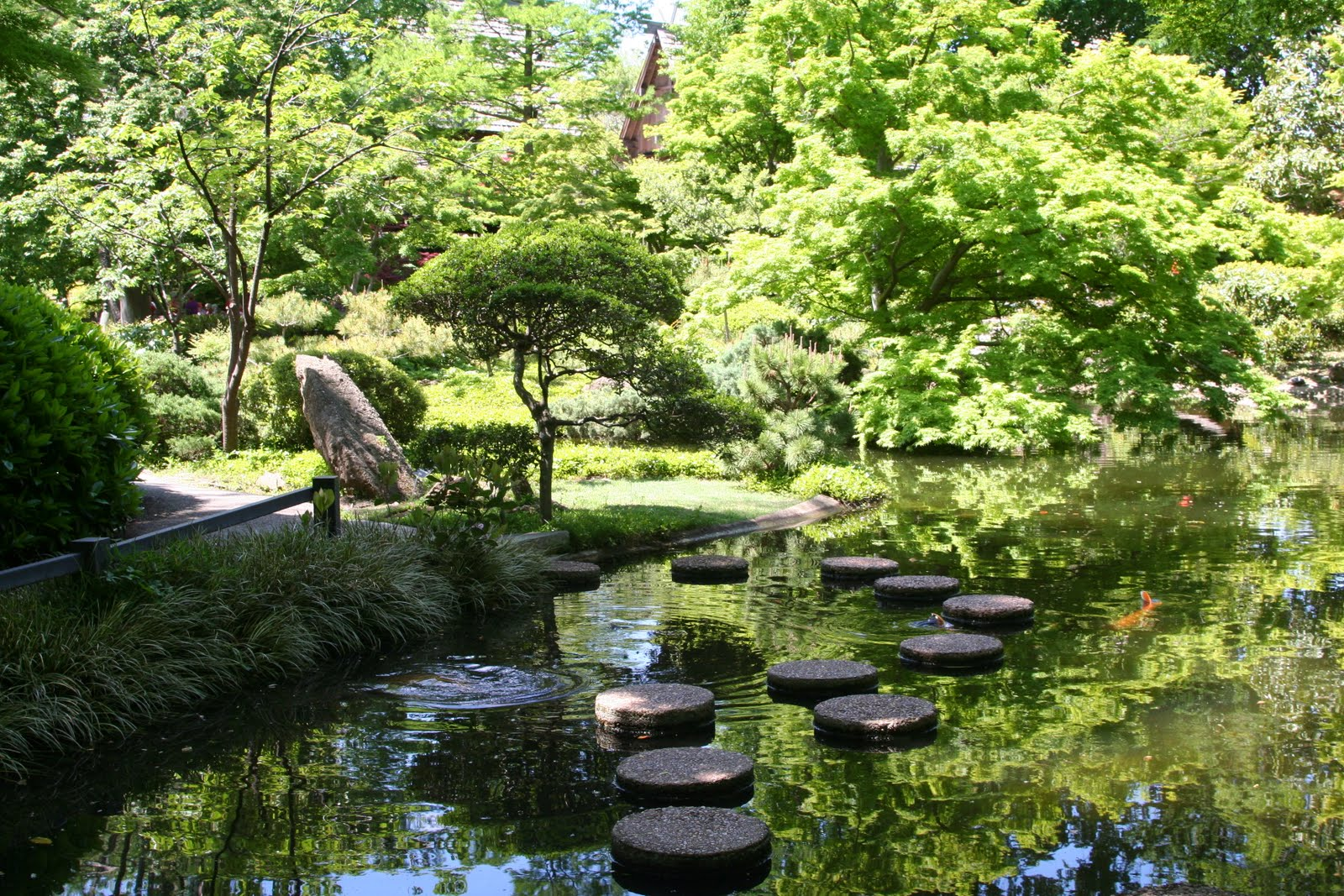 Adventures of amy japanese gardens fort worth botanical gardens - Japanese garden ...