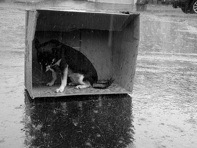 dog+in+house+in+rain.jpg