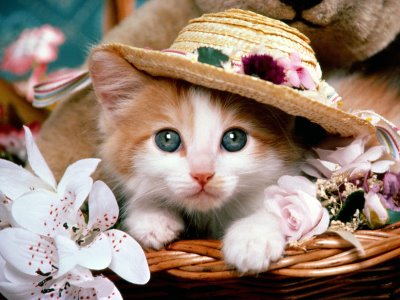 cute cat wallpapers. Cat Wallpaper - 3