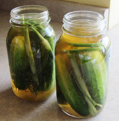 No Canning Required Dill Pickles @ Common Sense Homesteading