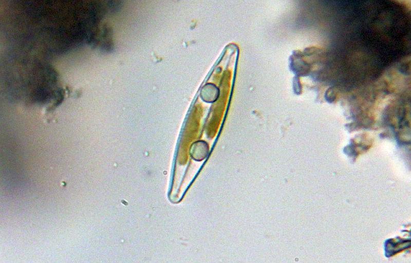 richtiges mikroskopieren 10 regelndrehscheibe