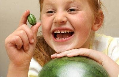 Pepquino melon