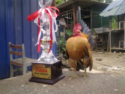 The Champion Serama