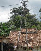 Pohon Keranji di Belinyu :