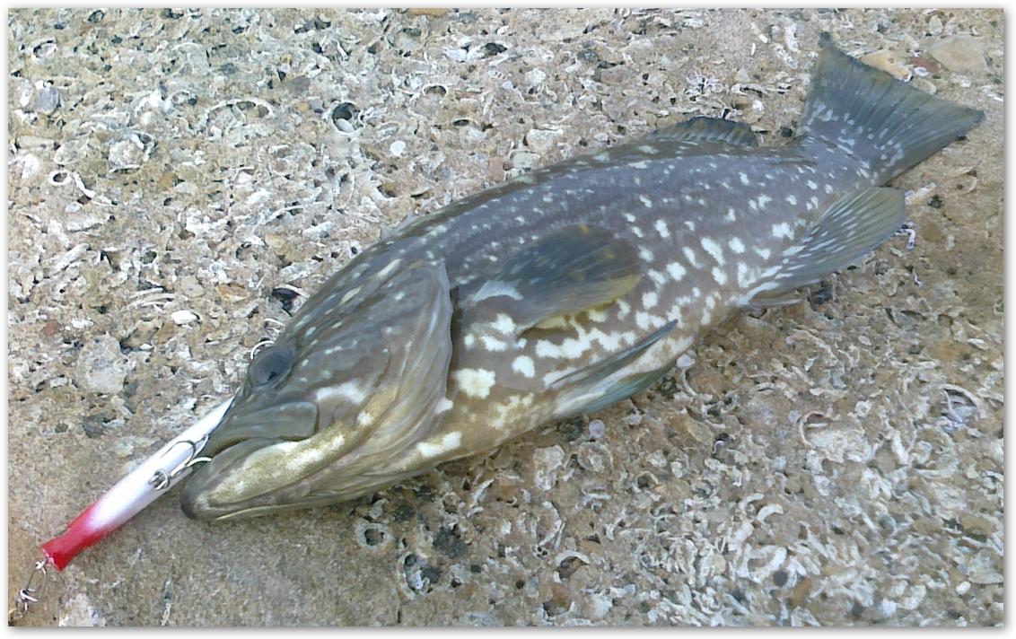 начала клевать рыба
