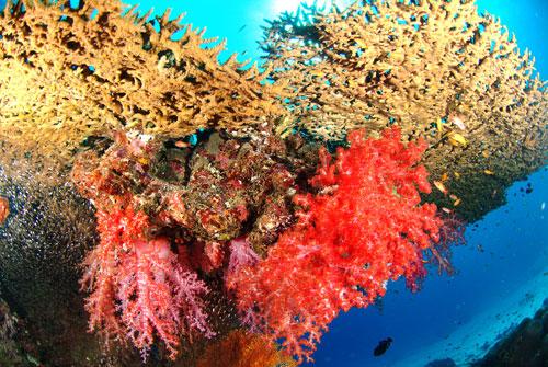Thailand: Andaman Sea
