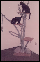 Stormy and Princess on their cat tree