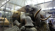 woolly+mammoth.bmp