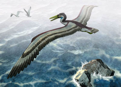 Pelagornithid reconstruction. Note the enormous wingspan and tooth-like structures.