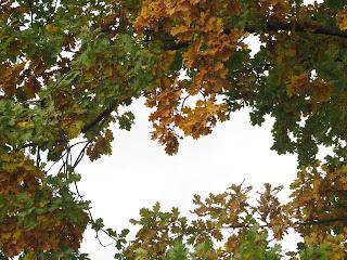 небо-осень