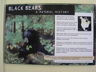 Black Bears