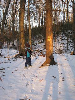 Hemlock Trail