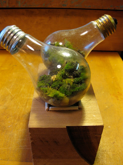 light bulb terrarium with moss