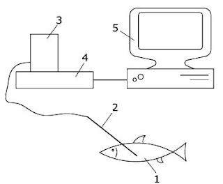 Nuevo invento: Determinador del sexo del pescado