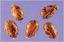 endaru seeds