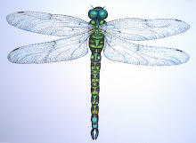 my dragonfly print