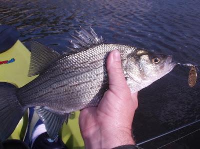 Kenny 39 s great outdoors missouri bass fishing tough bite for Missouri bass fishing