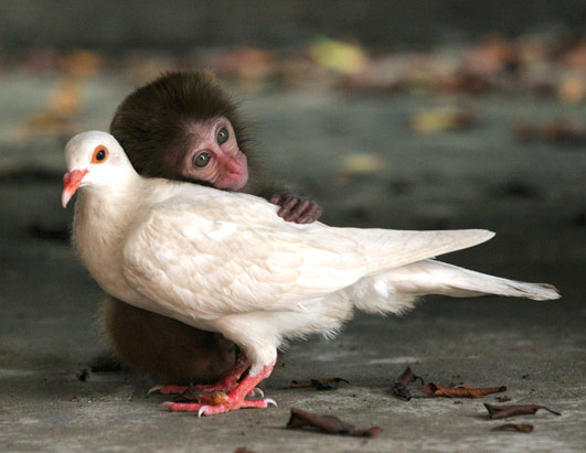 , will humans begin to desire, date and eventually mate with animals ...