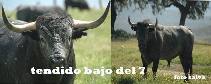 TENDIDO BAJO DEL 7