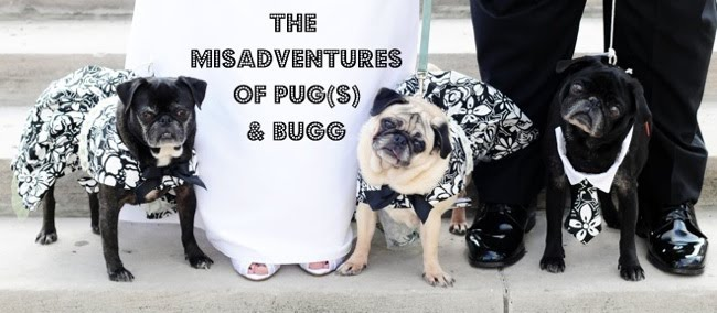 The Misadventures of Pug(s) & Bugg