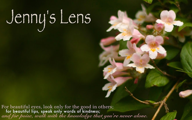 Jenny's Lens