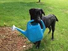 our dog, SAM !!!