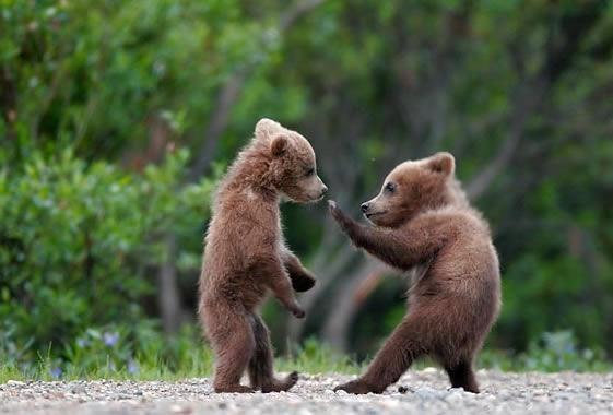 Anak Beruang Lucu Gambar Gambar Aneh