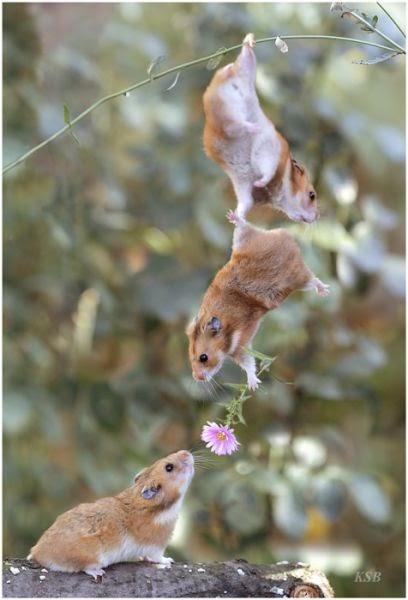 Foto Binatang Lucu Gambar Gambar Aneh