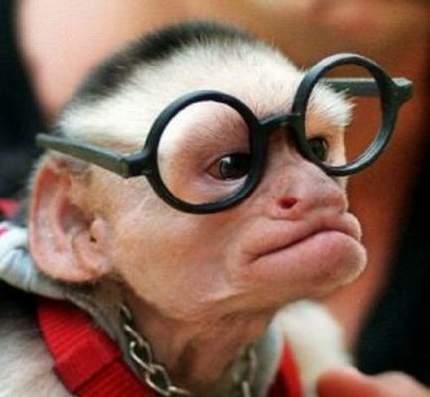 gambar monyet lucu:gambar-gambar aneh