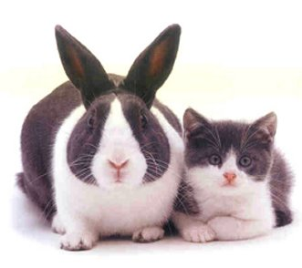 Brother From Another Mother Cat and Rabbit