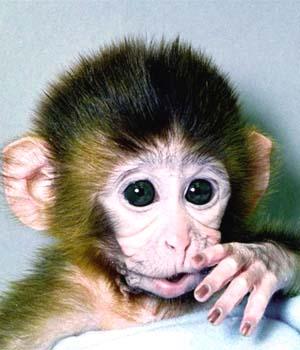 Monyet Atau Kera Lucu Gambar Gambar Aneh