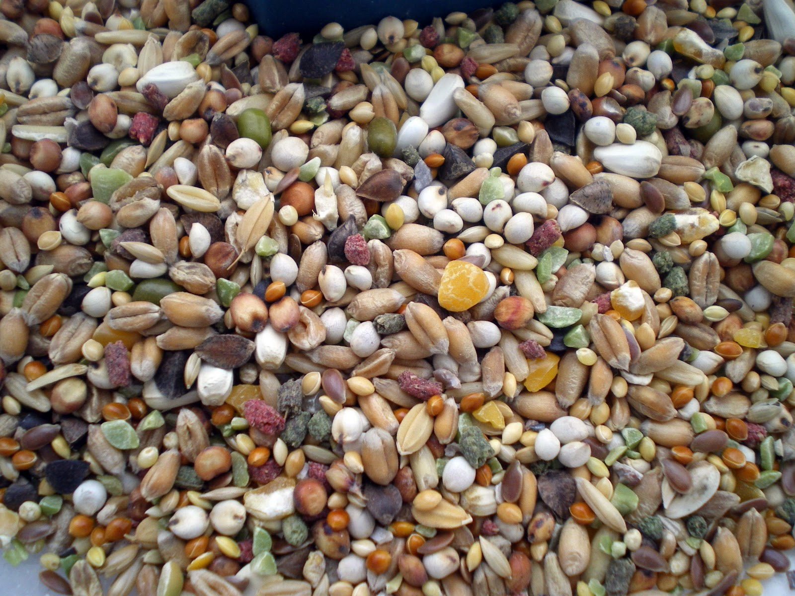 Resultado de imagen de semillas para aves