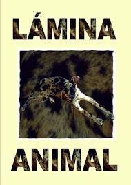 Lámina Animal