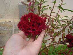 Flor para você.