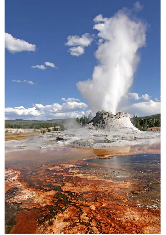 In Yellowstone Park there are many animals: