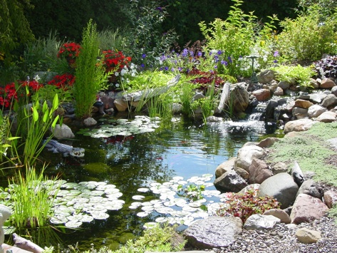 Charmed dreaming of a backyard pond for Landscaping around koi pond