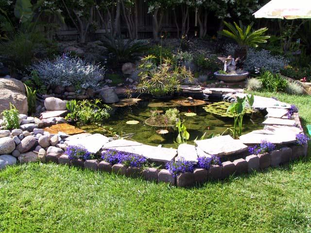 Charmed dreaming of a backyard pond for Backyard koi pond ideas