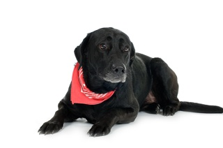 black dog names dog with red bandana