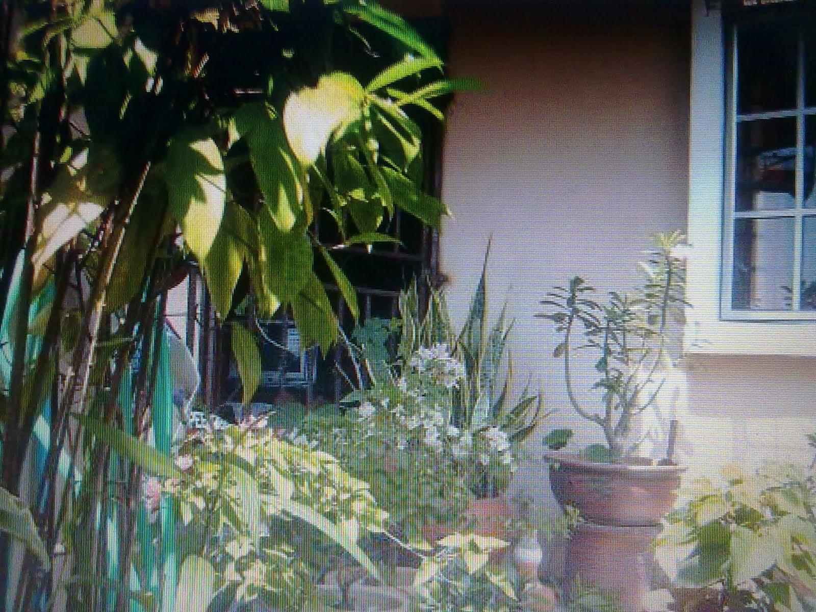Property for sale single terrace house batu kawan for Terrace 9 classic penang