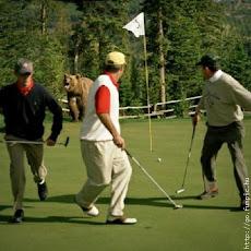 Bear Golf