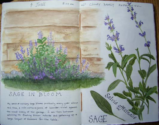 Botanical Illustration Study Food and Culture with Maria