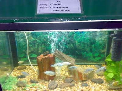 Bannerghatta Aquarium Fish