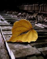 http://4.bp.blogspot.com/_jOXiLwc5068/TQ5VzPZ5uiI/AAAAAAAAAK4/aW2lFVBbyKo/s1600/saudades.jpg
