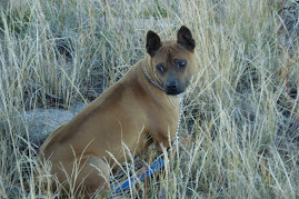 Akuna, The Adventure Dog