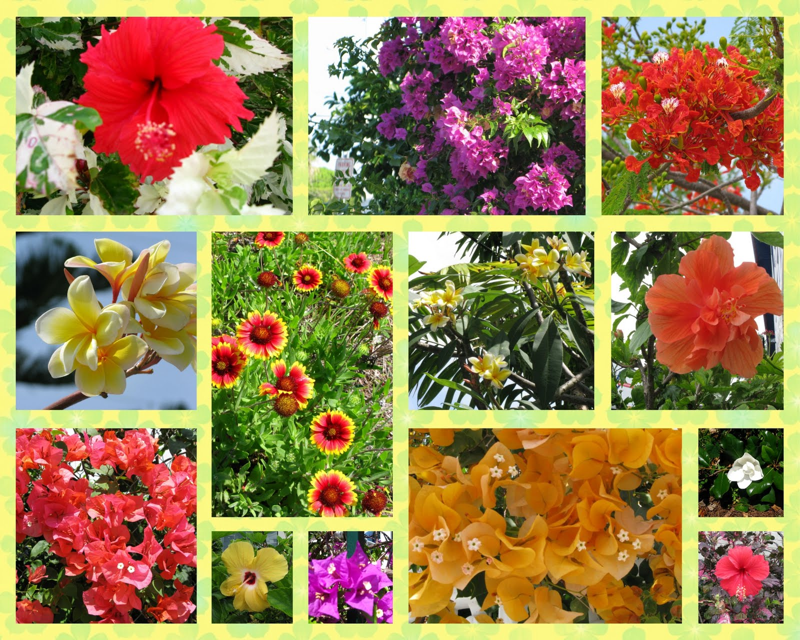 Meandering flowers of florida dont forget to click on the image above to see a larger display of this collage izmirmasajfo